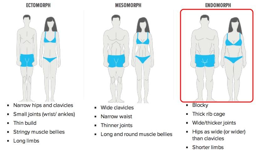 Body Type – Ectomorph, Mesomorph and Endomorph